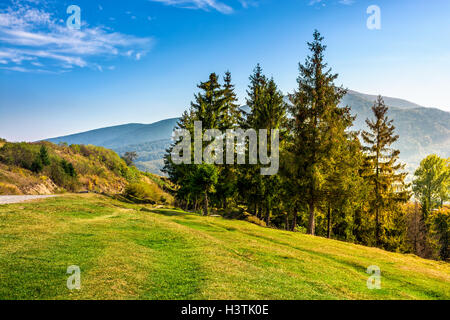 Classic Carpathian Mountains landscape in early autumn. Spruce forest on the edge of hillside over the valley by - Stock Photo