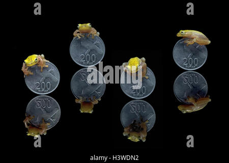 Miniature tree frogs on Indonesian Rupiah coins - Stock Photo