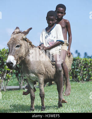 The small Antilles, Grenada, boy, locals, two, sit, ride donkey the Caribbean, West-Indian islands, the small Antilles, - Stock Photo