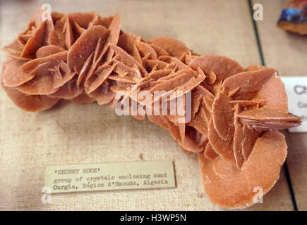 Example of Desert rose crystal, a formation of crystal clusters of gypsum or baryte which are rose-like. Dated 21st - Stock Photo