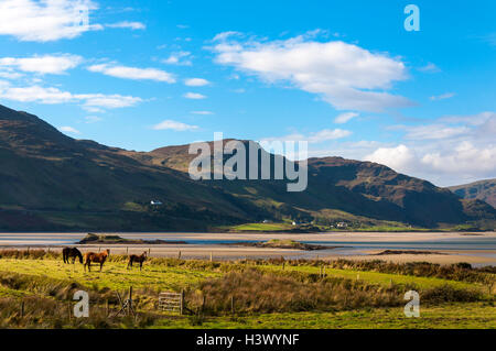 Ardara, County Donegal, Ireland weather. October 12th 2016. Horses graze in a meadow on Ireland's 'Wild Atlantic - Stock Photo