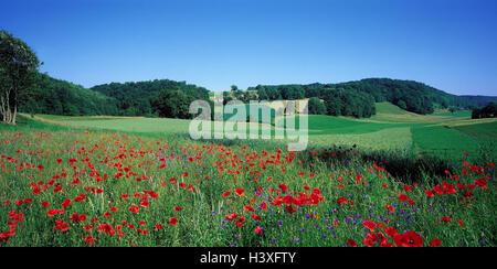 Switzerland, Solothurn, hill scenery, meadow, poppies, flower meadow, flowers, clap poppy seed, cornflowers, plants, - Stock Photo