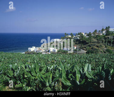 Spain, Canary islands, La Palma, San Andre, local overview, banana plantation, vacation, rest, town view, plantation, - Stock Photo