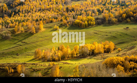 Aerial view of alpine forest, Kanas Lake, Xinjiang, China - Stock Photo