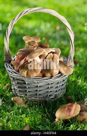 Autumn mushrooms basket on grass meadow - Stock Photo