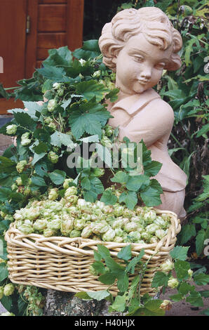 Garden figure, covered, common person, hops, Humulus lupulus, basket, fruit plug nature, botany, garden, plant, - Stock Photo