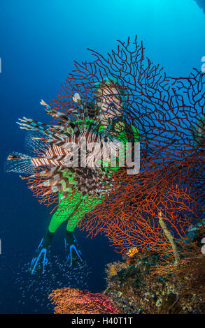 Colorful Tropical Coral reef with lionfish and scuba diver - Stock Photo
