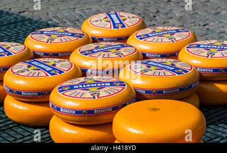 Rounds of Dutch Beemster cheese wheels  at the cheese market of Alkmaar, Netherlands - Stock Photo