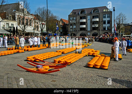 Rounds of Dutch Beemster Gouda cheese at the cheese market of Alkmaar, Netherlands - Stock Photo