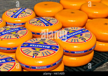 Rounds of Dutch Beemster cheese at the cheese market of Alkmaar, Netherlands - Stock Photo