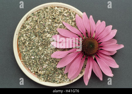 Medicinal plants, red solar hat, Echinacea purpurea, dryly, dished plates, blossom plants, medicinal plants, herbs, - Stock Photo