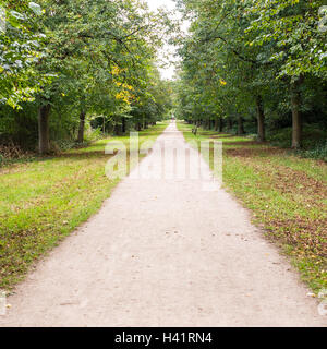 Long straight dirt road of white soil in the middle of forest with green grass on the side - Stock Photo