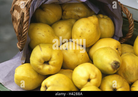 Basket, quinces, Cydonia oblonga, fruit, fruits, autumn fruits, pomes, pear quinces, nutrition healthy, rich in - Stock Photo