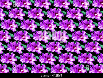 Seamless floral pattern from purple hibiscus  for black background - Stock Photo