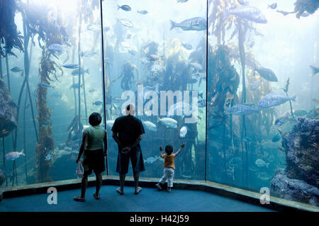 South Africa, Western Cape, Capetown, Victoria and Alfred Waterfront, Two Oceans Aquarium, water basin, visitors, - Stock Photo
