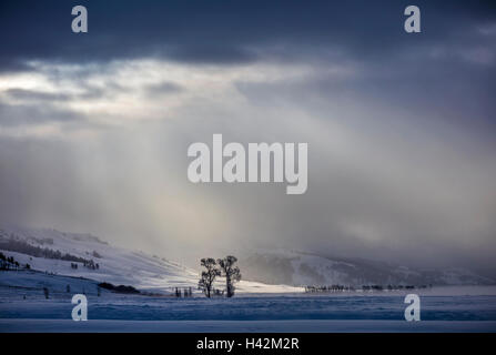 Yellowstone National Park, Wyoming/Montana: Morning light breaking through the clouds in the Lamar Valley in winter - Stock Photo