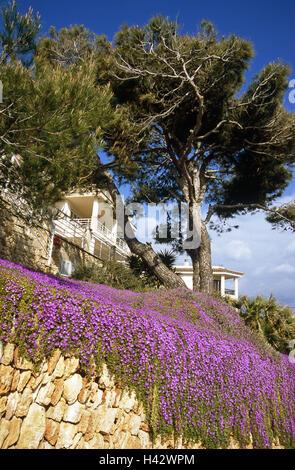 Spain, the Balearic Islands, island Majorca, Cala Figuera, stone defensive wall, midday flowers, pine, hotel, Balearic - Stock Photo