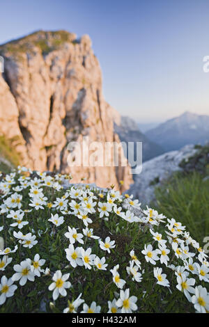 Slovenia, Flowers growing on cliff in evening light - Stock Photo