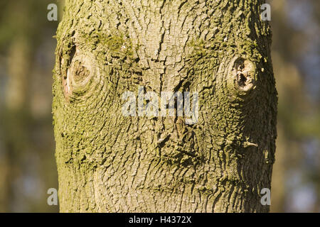 Trunk, knotholes, icon, look, wood, tree, strain, wooden, nature, editing, fissure, branch, cross-sectional area, - Stock Photo