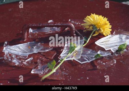 Blossom Chrysanthemum Glass Vase Broken Shards Lie Flower Cut