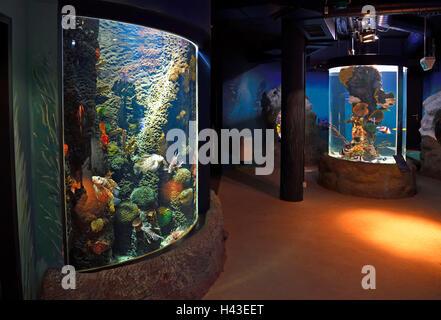 Interior of Sylt Aquarium, Westerland, Sylt, North Frisian Islands, North Frisia, Schleswig-Holstein, Germany - Stock Photo