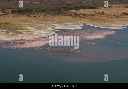 Africa, Kenya, brine Bogoria, - Stock Photo