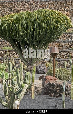 spain canary islands lanzarote ujardin de cactusu cactus garden
