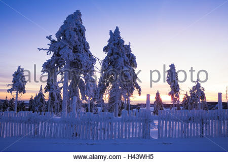 snowy spruces on the Fichtelberg, sunrise, - Stock Photo