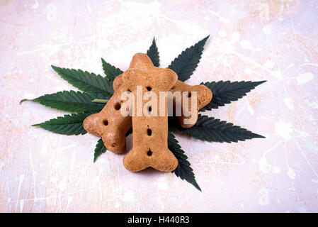 Dog treat and cannabis leaves over white wood board - medical marijuana for pets concept - Stock Photo