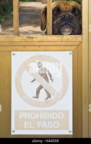 Spain, Majorca, Portocolom, front door, watchdog, portrait, door, danger sign, the Balearic Islands, Balearic Islands - Stock Photo