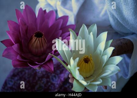Violet White waterlily or lotus on old woman hand. - Stock Photo