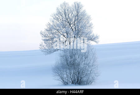 Winter scenery, tree, shrub, hoarfrost, morning light, winter, Germany, Bavaria, Upper Bavaria, broad-leaved tree, colour mood, white, blue, snow, frost, coldly, cold, nature, loneliness, ice, maturity, nobody, wintry, winter motif, freezes over, snow-covered, snow surface, scenery, winter morning, horizon, winter's day, silence, morning, atmospheric, season,