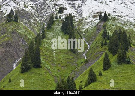 Austria, Vorarlberg, Hochtannberg Pass, spruces, snow, - Stock Photo