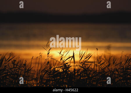 Sunset, reed, lake, Finland, Rantasalmi, Saimaa lake, - Stock Photo