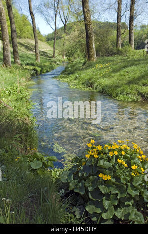 Scenery, brook, marsh marigolds, Caltha palustris, Germany, home Eder, home Hürn, trout brook, waters, stream course, - Stock Photo