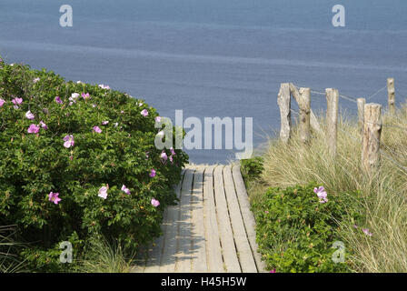 Germany, Schleswig - Holstein, island Sylt, dune scenery, way, roses, sea, - Stock Photo