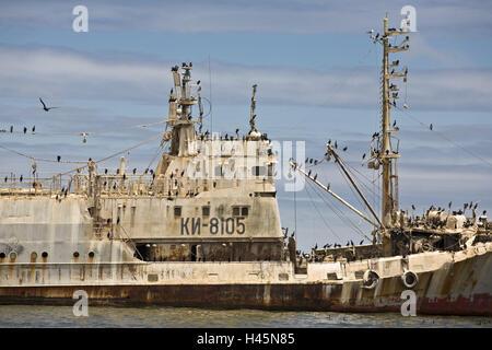 Africa, Namibia, Walvis Bay, ship wreck, cormorants, Phalacrocorax carbo, - Stock Photo