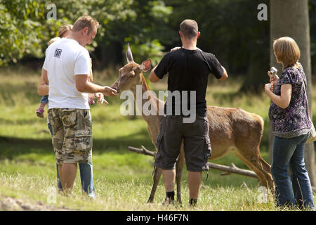 Germany, Hessen, Northern Hessen, game park Tight, red deer enclosure, visitor, hind, feed, - Stock Photo