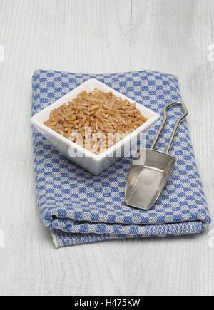 Ur cereal Kamut, Khorasan wheat, Triticum turgidum x polonicum - Stock Photo