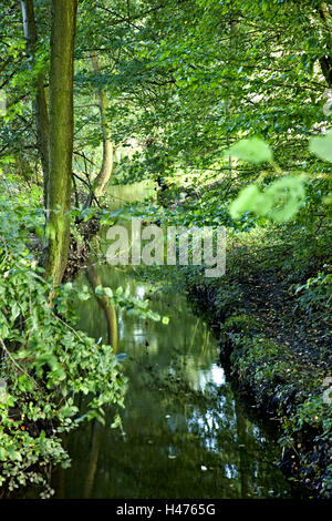 Brook, thicket, reflection, plants, nature, trees, foliage, leaves, waters, lush, green, outdoors, Hamburg, Germany, - Stock Photo