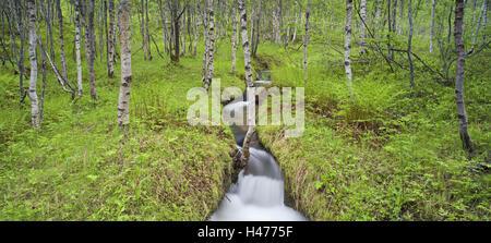 Norway, Nordland, birch forest, brook, Stock Photo