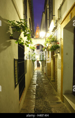Spain, Andalusia, Cordoba, lane 'to call Flores' in the Old Town fourth Juderia, evening, - Stock Photo