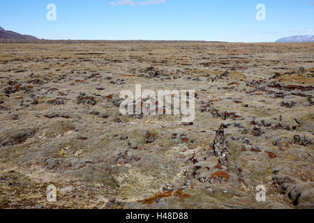 thick moss covered lava boulder field Iceland - Stock Photo