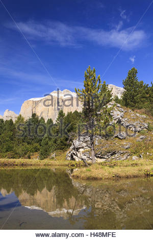 Sella reflecting in lake framed by spruces, Italy, Trentino, - Stock Photo