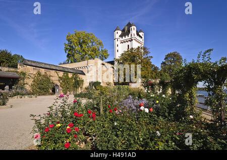 Germany, Hesse, Rheingau (region), Eltville am Rhein (village), Electoral Castle Eltville, Rose Garden, - Stock Photo