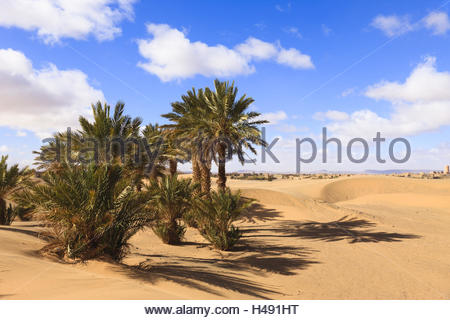 Date palms in the dunes of the erg Chebbi, vegetation belt on the edge of the Sahara, Morocco, North Africa, Merzouga, - Stock Photo