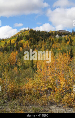 Nature, scenery, hill, trees, autumn, USA, Alaska, - Stock Photo