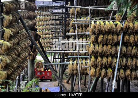 Guizhou, China. 13th Oct, 2016.  Kam sweet rice aired in a village in Congjiang County, southwest China's Guizhou - Stock Photo