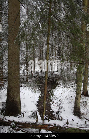 Winter, wood, conifers, - Stock Photo