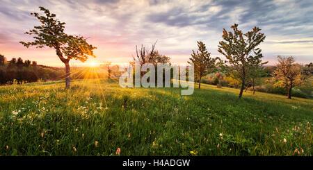 Germany, Bavaria, Augsburg Western Woods Nature Park, shrubs, Leuthau, sunrise, - Stock Photo